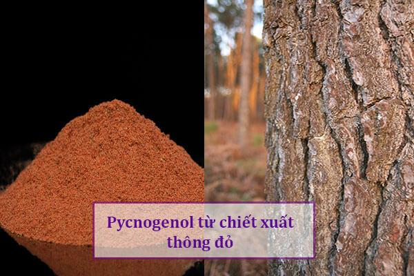 Pycnogenol trong chiet xuat thong do